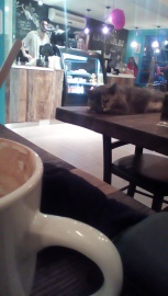 "Cafe Venosa ""Cat Cafe"""